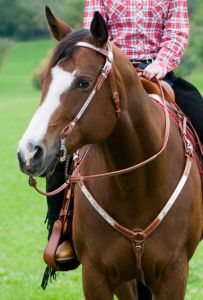 Martingale western SHOW HKM