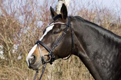 Bridon TESSA - Bridons d'équitation
