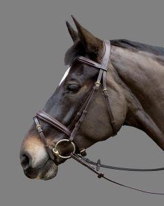 Bridon Mountain Horse FAIRYTALE