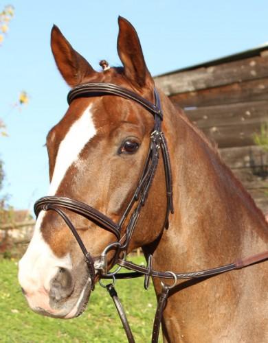 Bridon ProTanner Gold CAISTER - Bridons d'équitation