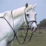 Collier de chasse + martingale NORTON, poney