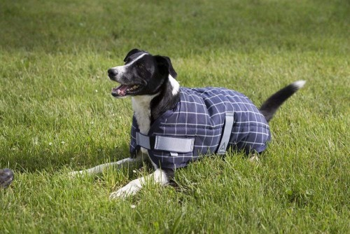 Couverture chiens COLORADO - Accessoires pour Chiens